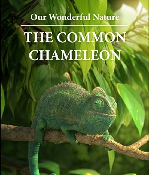 Movie poster showing an animated chameleon sitting on a branch